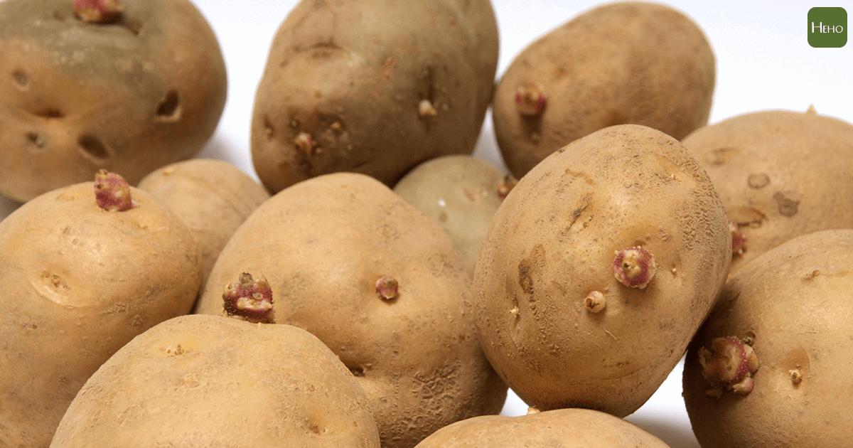 這7種會發芽的食物有幾種不能吃?看你答對幾個