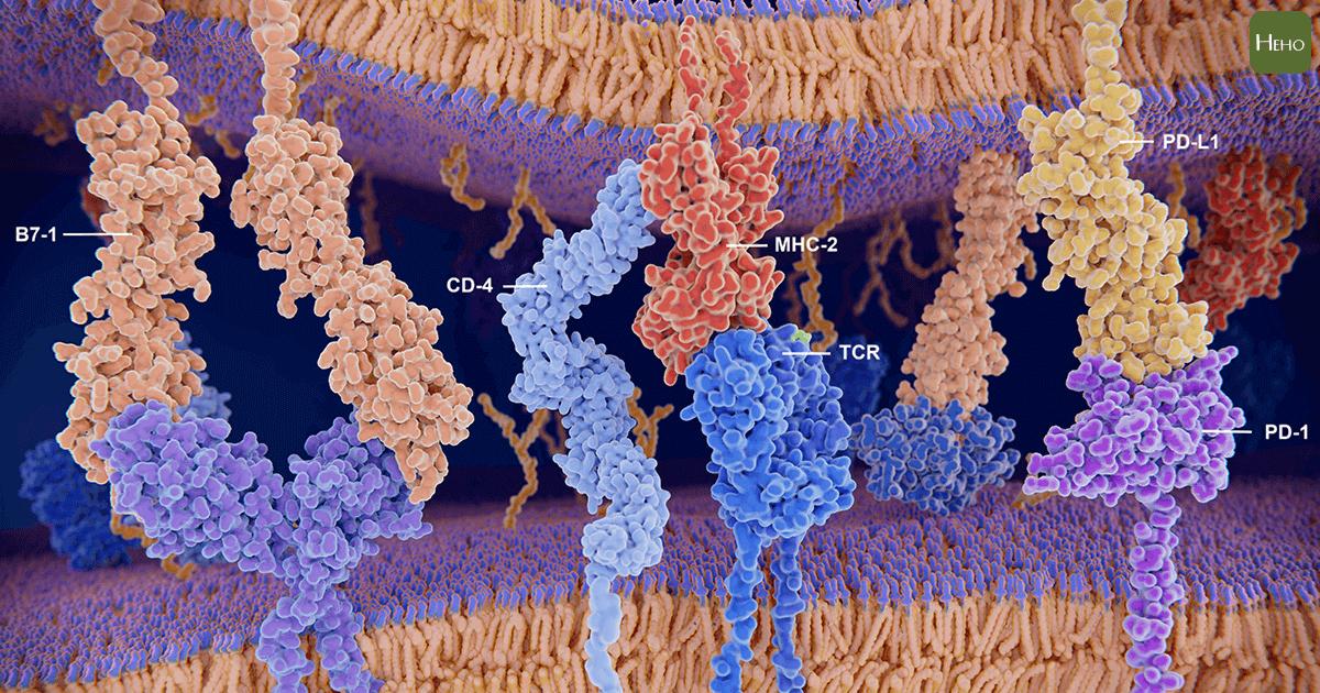 PDL1-01