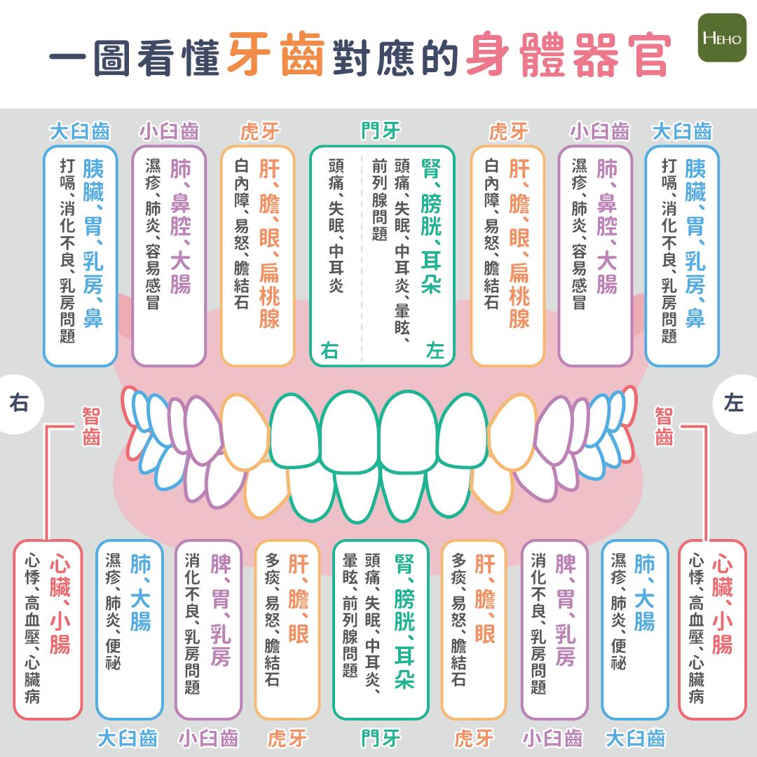 牙痛可能是內臟警訊?一圖看懂牙齒對應的身體器官