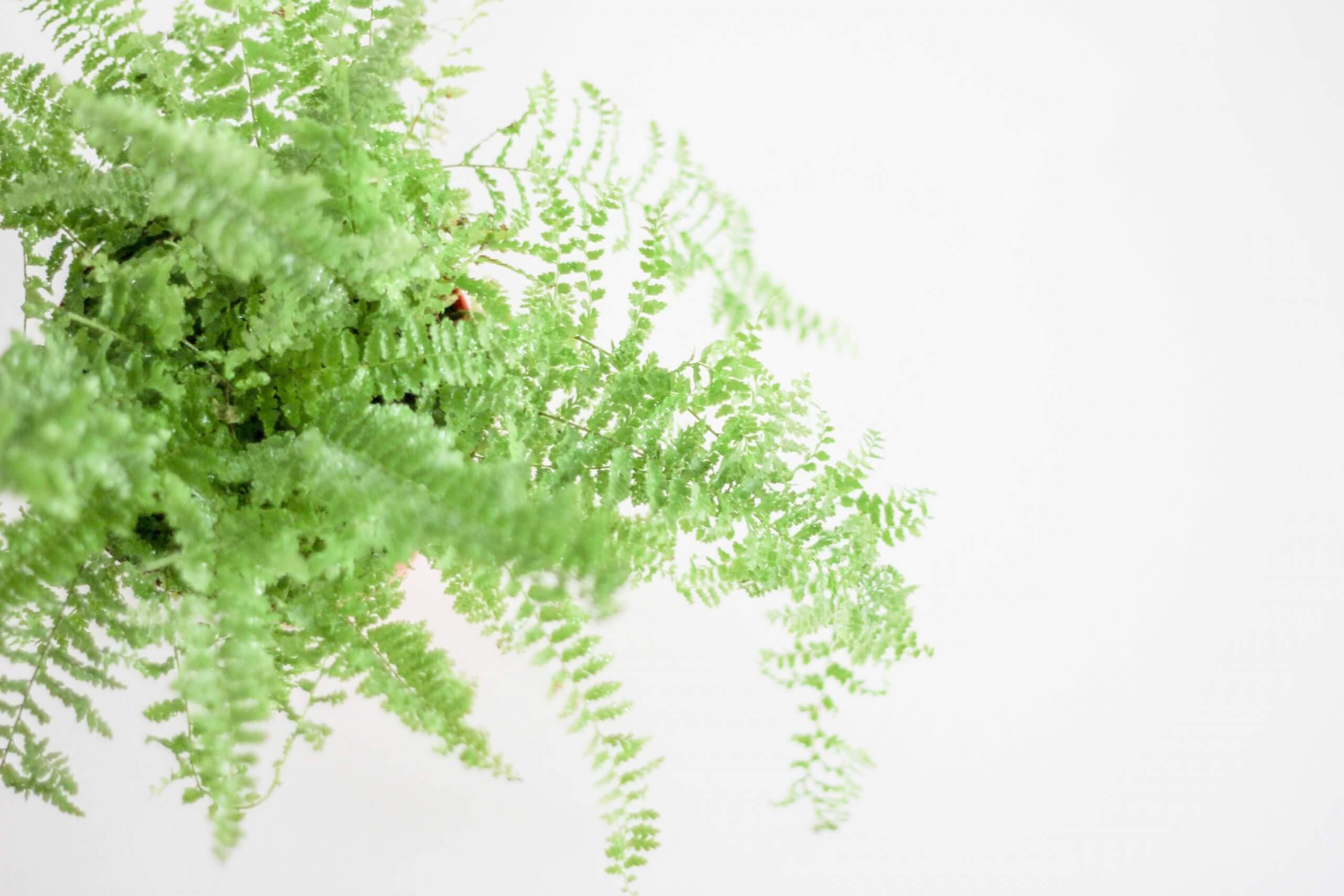 天然空氣清淨機 選對「盆栽」改善80%空氣品質又排毒