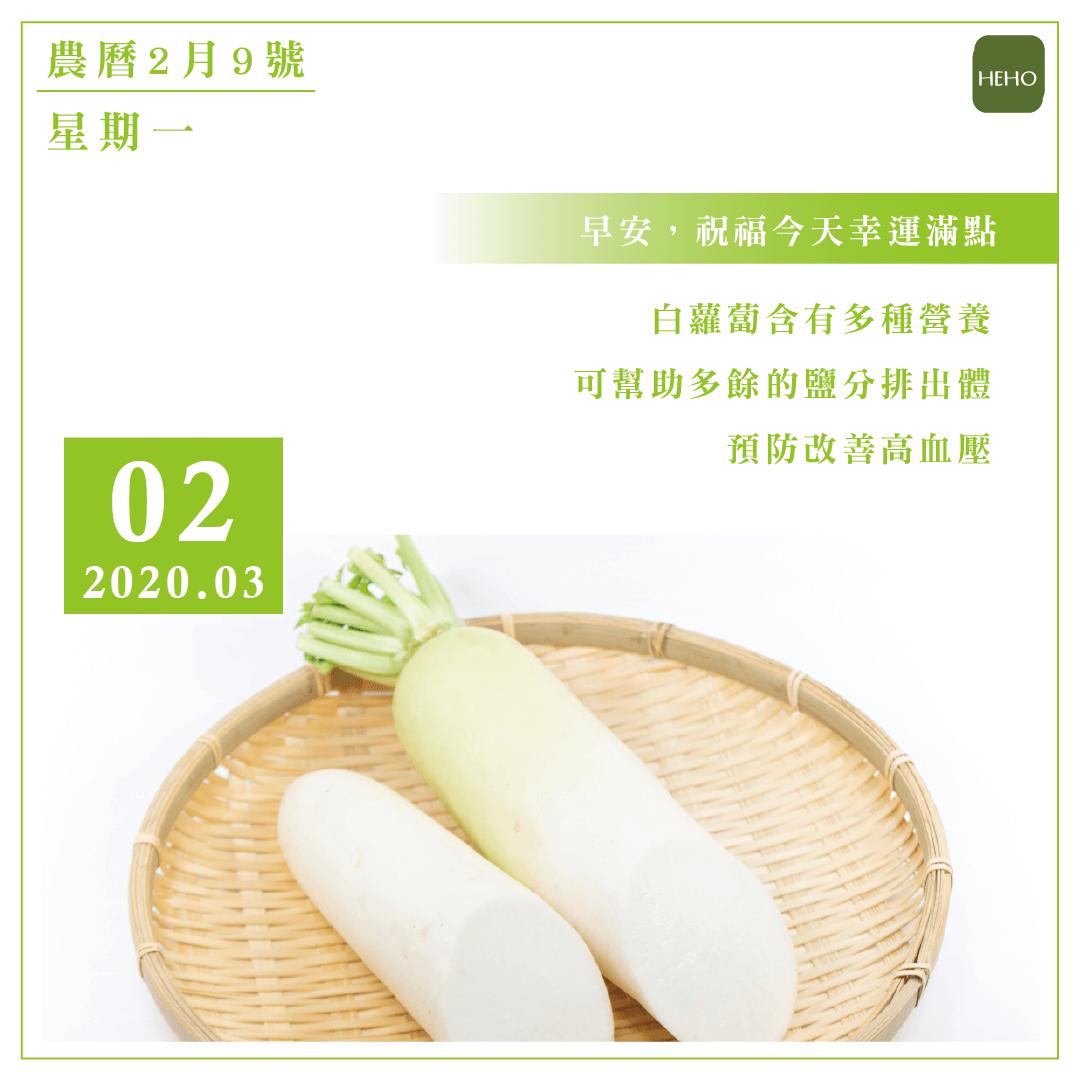 3月2日 白蘿蔔的營養可防高血壓