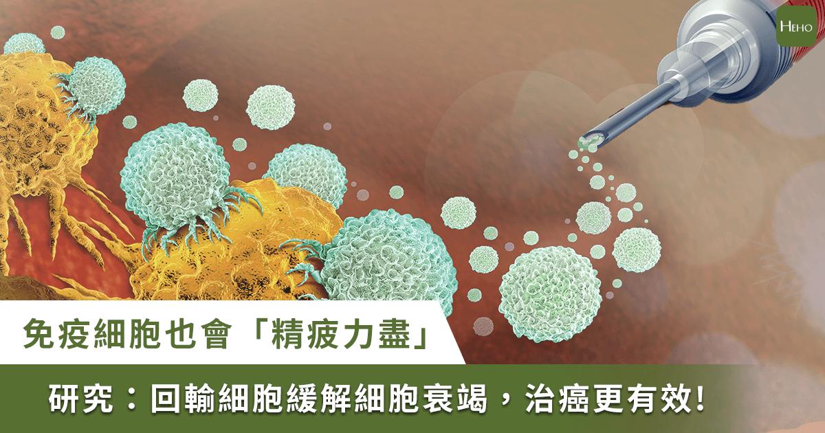你的免疫細胞也會「精疲力盡」!權威期刊:回輸細胞能抗病毒、治癌症