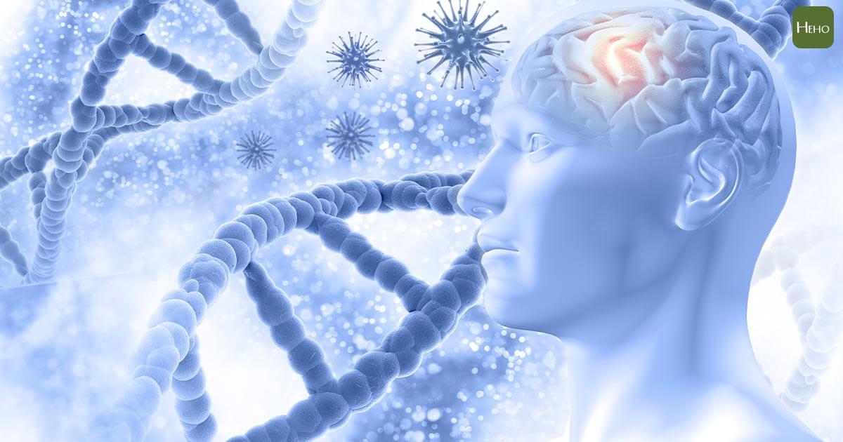 COVID 19/康復者復陽、惡化原因找到了?研究:新冠病毒可藏匿於大腦